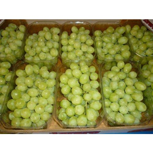 Egyptian Seedless Grapes