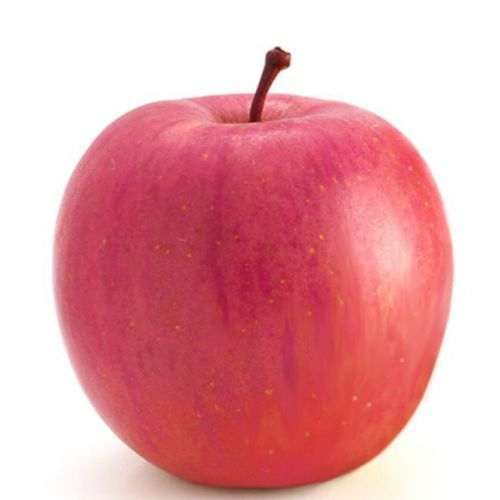Fuji red apple